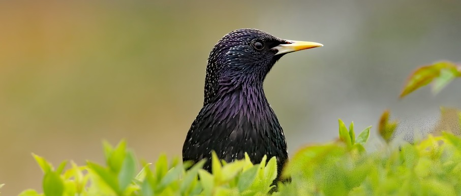 vogelhuisje spreeuw